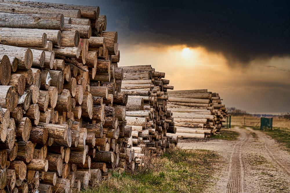 Start a Logging Business